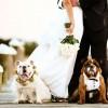 Matrimonio a tre: lui, lei e il cane!